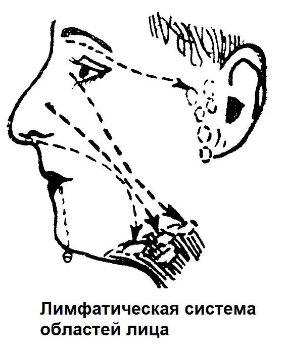 Лимфатическая система областей лица