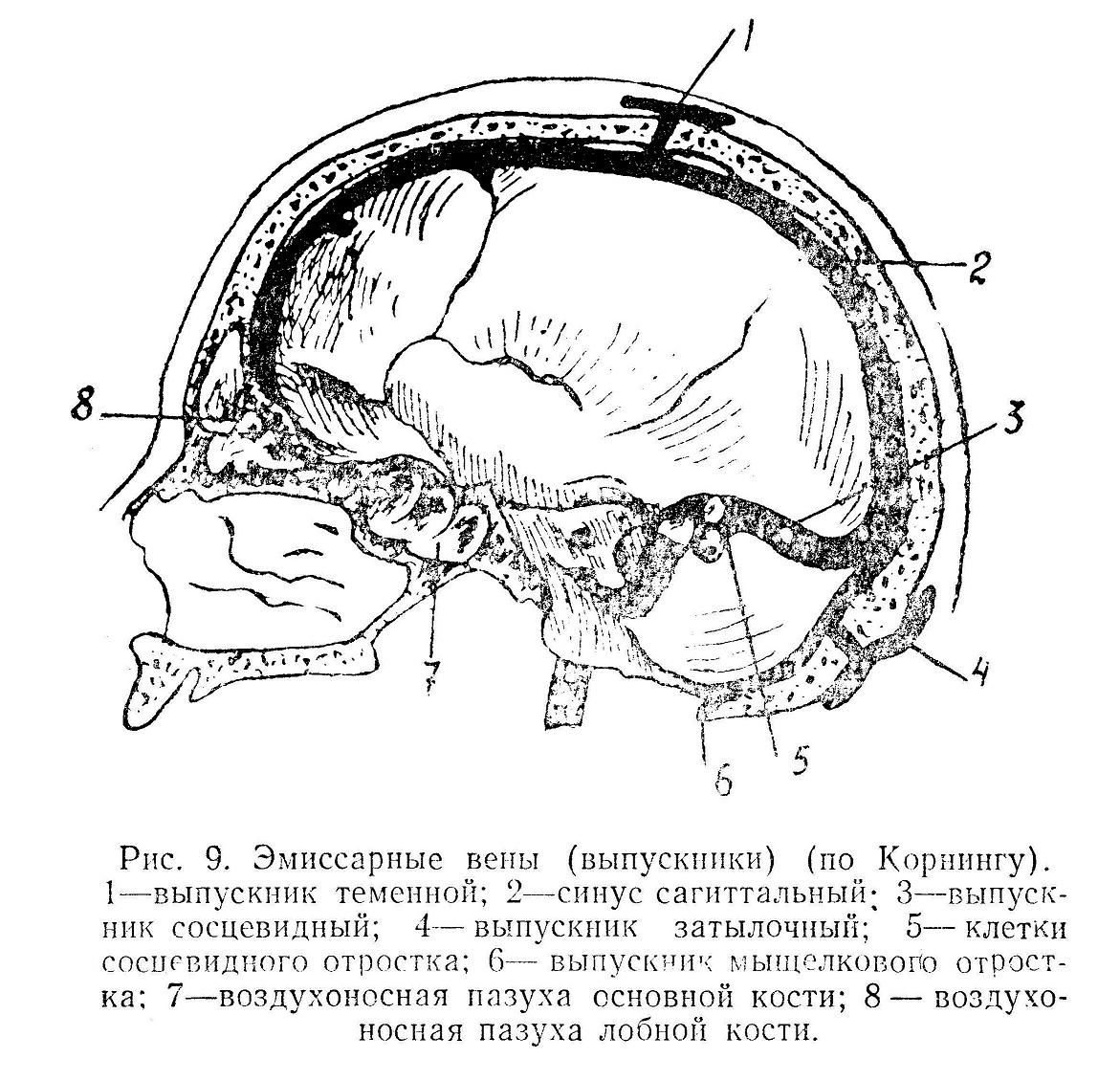 Эмиссарные вены