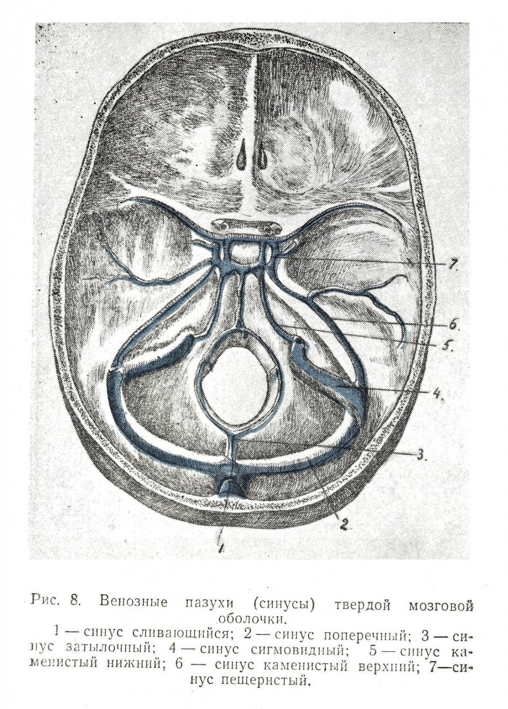 Венозные пазухи (синусы) твердой мозговой оболочки