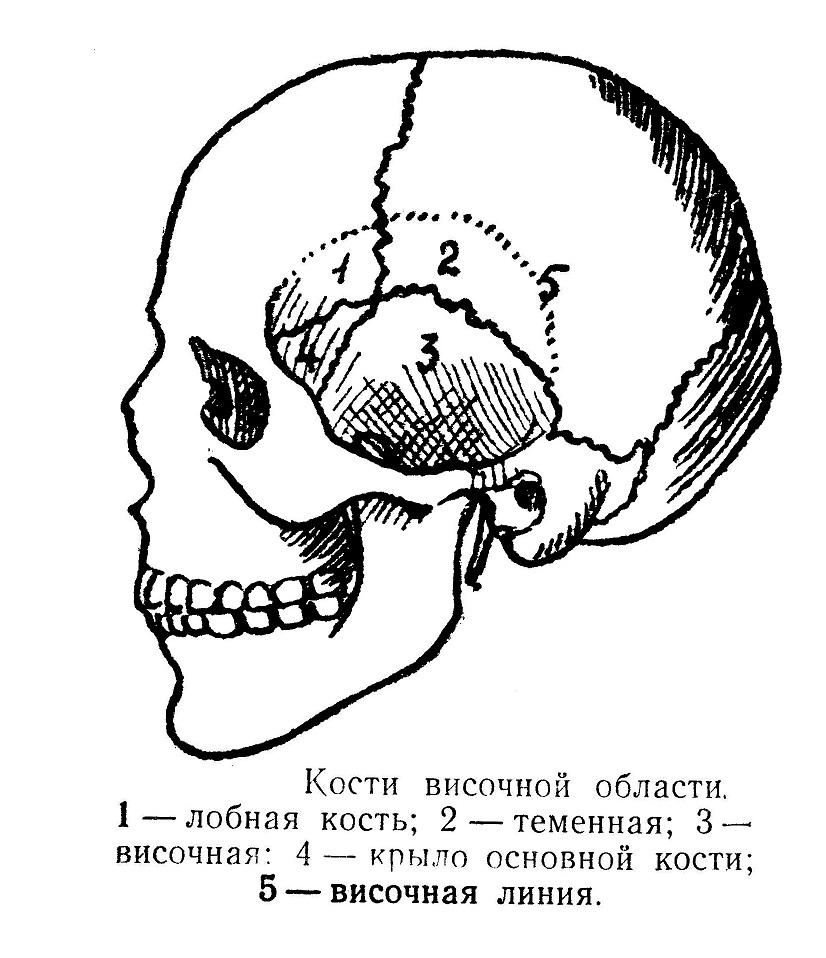 Кости височной области
