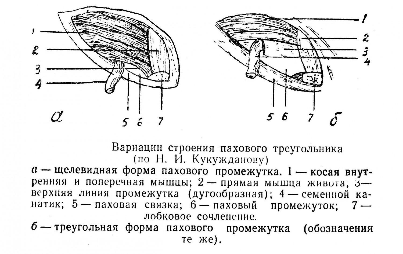 Вариации строения пахового треугольника