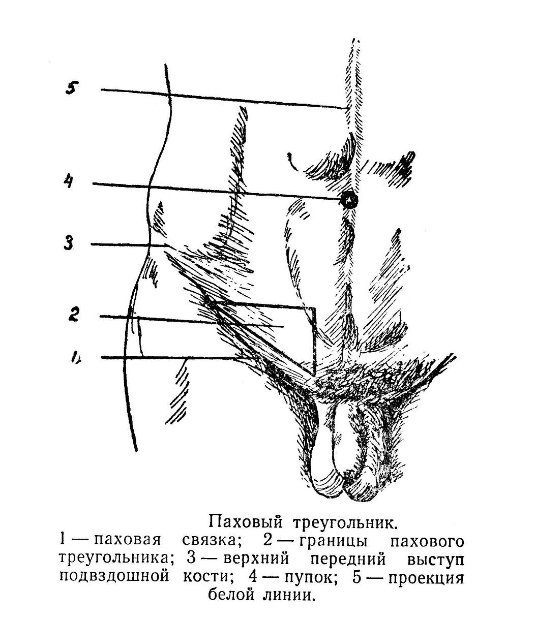 Паховый треугольник