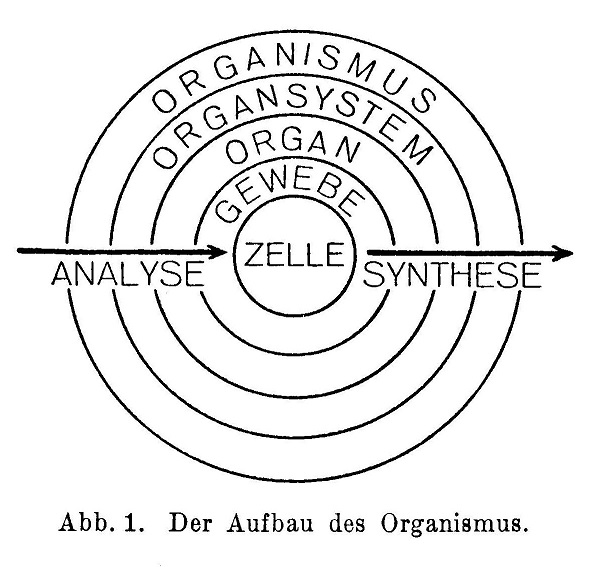 Der Aufbau des Organismus