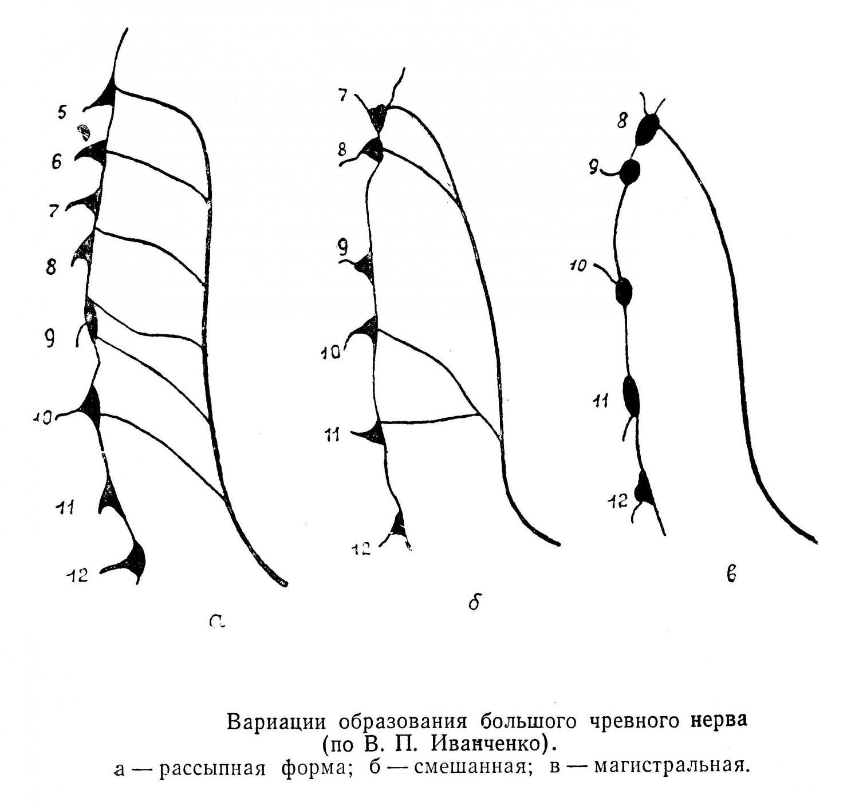Вариации образования большого чревного нерва